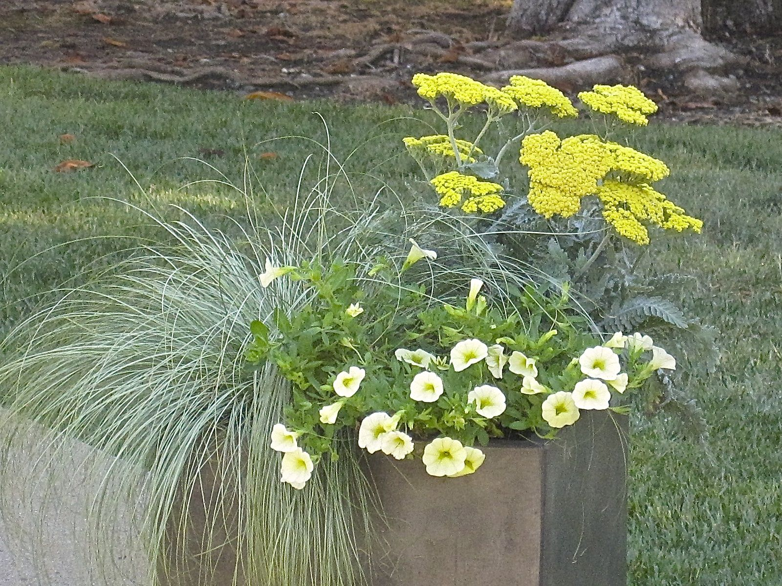 A Container With Multiple Plantings, Providing Various Colors And Texture.  Photo Courtesy Of Julie