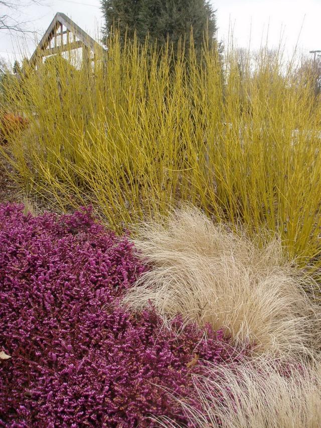Ornamental grasses at the University of Washington Center for Urban Horticulture's Soest  Garden. Photo courtesy of UW Botanic Gardens.