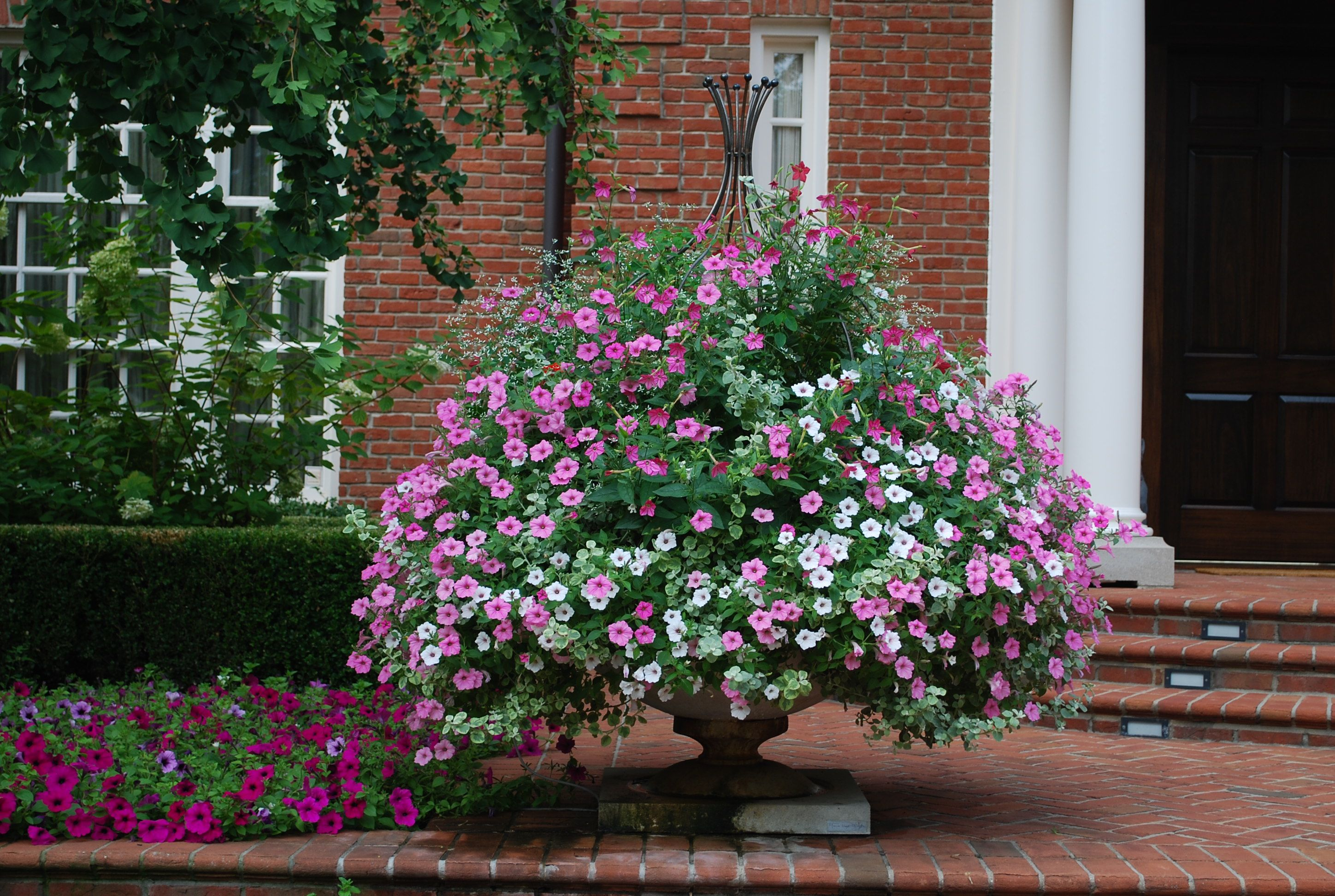 Container gardening 101 big results in small spaces for Best plants for container gardening