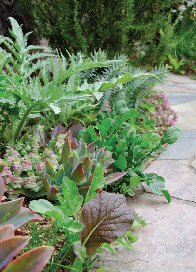 Succulent vegetable pathway . Photo b Jill Rizzo.