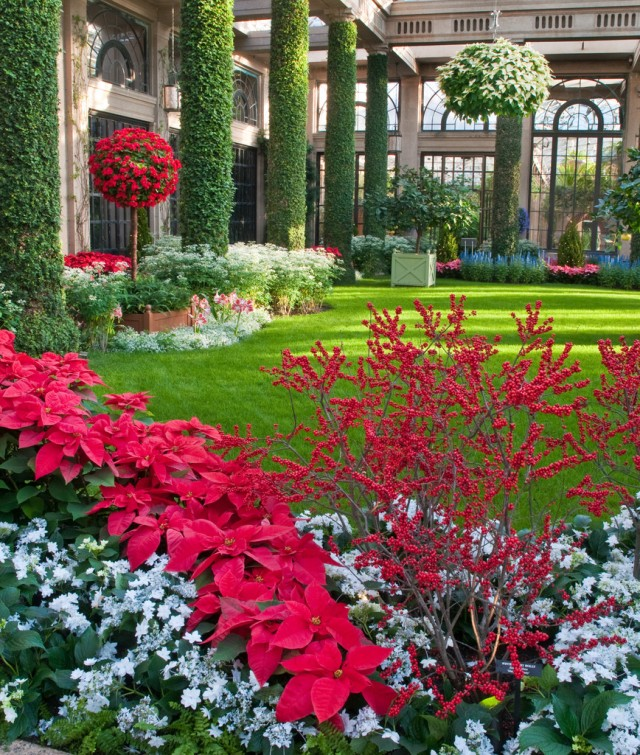 Winterberry, poinsettias and lacecap hydrangeas complement each other brilliantly.