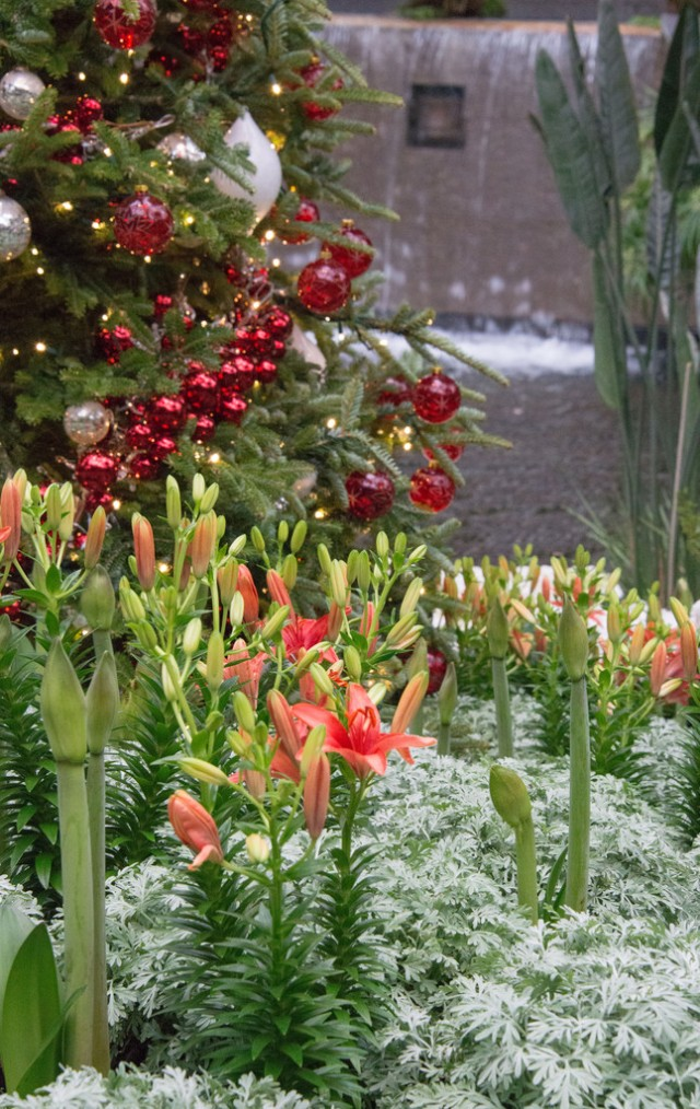 The conservatories burst with flowering plants, including Asiatic lilies, begonias, amaryllis, and cyclamens.