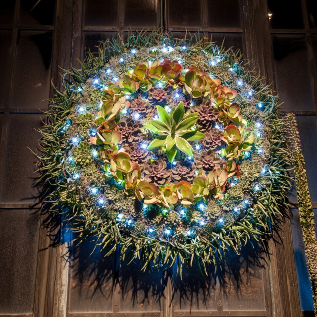 One of a number of living wreaths, this one fashioned out of succulents.
