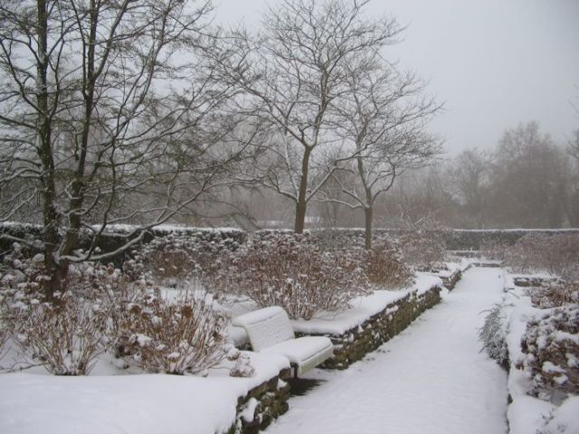 Hortus Botanicus Amsterdam in The Netherlands during winter. Photo courtesy of the Association of Friends of the Botanical Gardens 'Henricus Munting.'