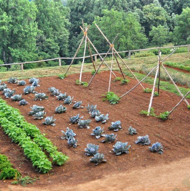 Digging It America S Home Grown Veggie Show Garden Variety