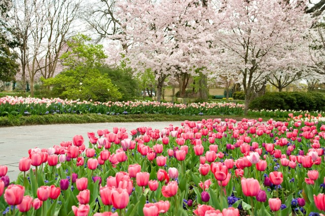 Flowers and trees in full bloom at the Dallas Arboretum. Photo courtesy of the Dallas Arboretum.