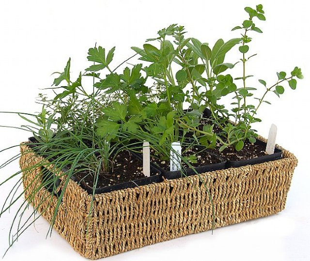 The Herbal 6 Plant Rope Basket, one of a number of herb gift baskets and growing kits offered by The Tasteful Garden.