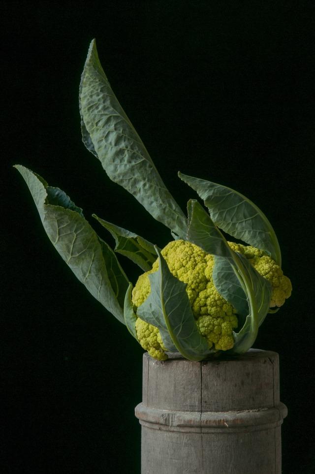 Lynn-Karlin_'Panther'_Cauliflower