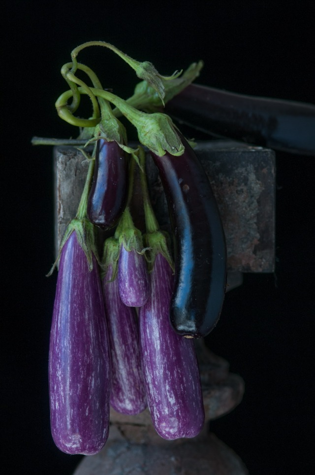 Lynn-Karlin_tender_eggplants