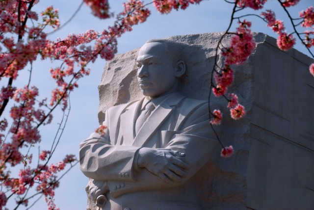 The Martin Luther King Jr. Memorial in Washington, D.C., with cherry blossoms in the foreground. Photo courtesy of Ron Cogswell via Flickr.