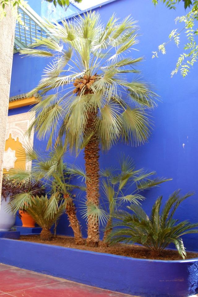 majorelle-gardens-marrakech-morocco-yves-saint-laurent-2