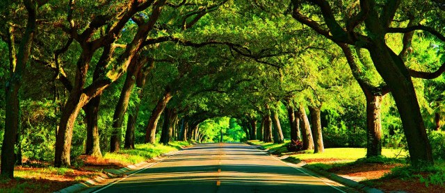 A centuries-old canopy road on 12th Avenue in Pensacola, Fla., that previously led to the entrance of a now-gone grand estate.
