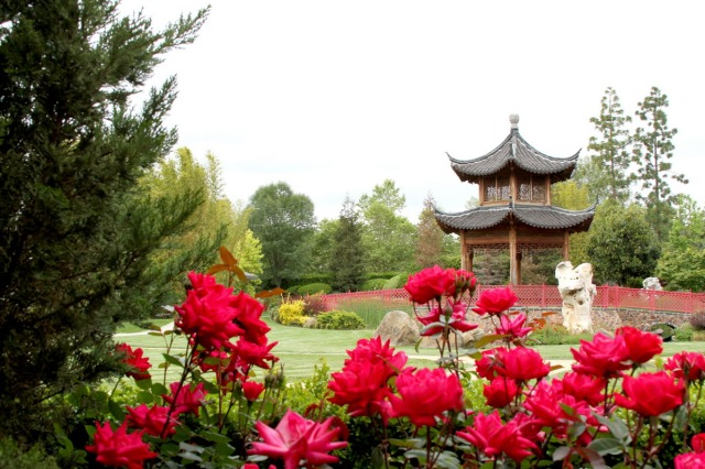 Chinese pagoda and gardens at California Health & Longevity Institute. Photo courtesy of CHLI.