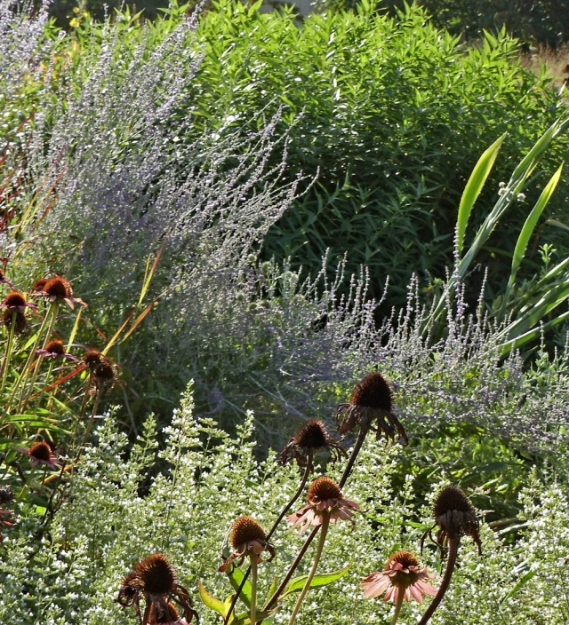 Roy-Diblik-The-Know-Maintenance-Garden-2