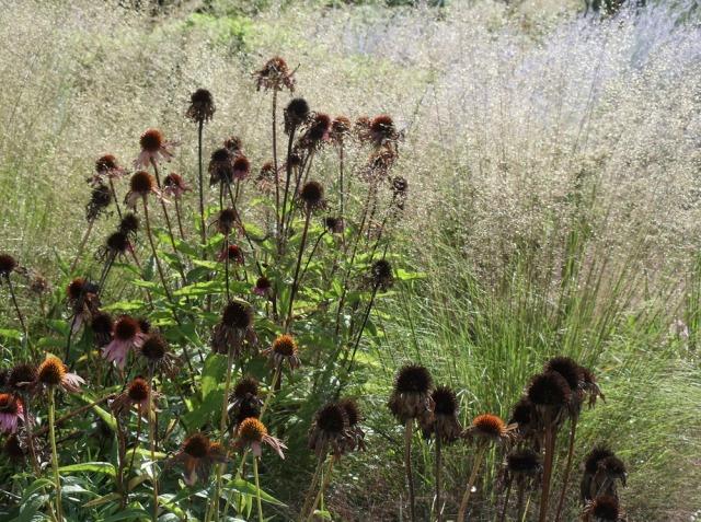 The know maintenance perennial garden a conversation for Less maintenance plants