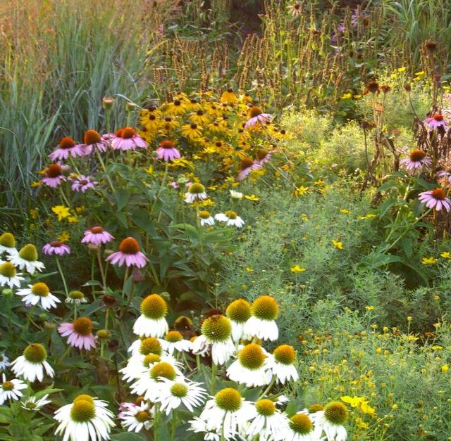 Roy-Diblik-The-Know-Maintenance-Garden-4