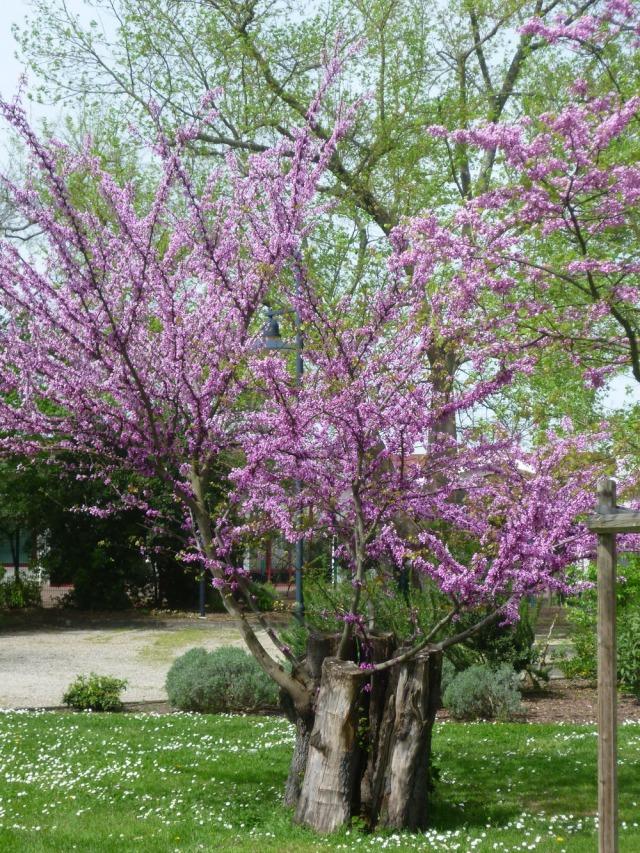 Bordeaux-France-Gardens-Parks-Plants-History-2