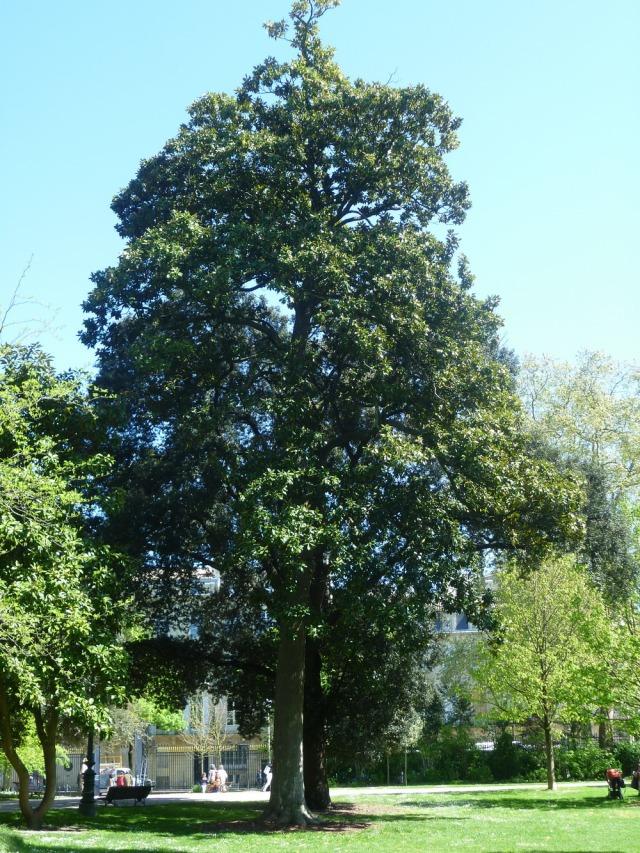 Bordeaux-France-Gardens-Parks-Plants-History-3
