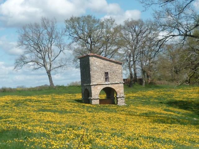 dandelion-flowers-weeds-france-1