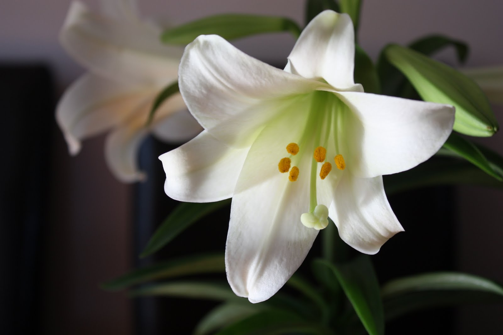 Pet Talk in Illinois: Toxin Tuesdays: Lilies
