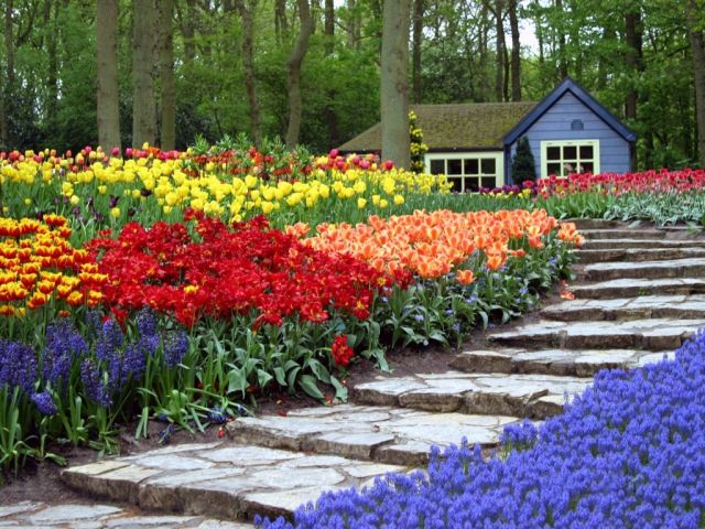 Covering some 70 acres and filled with more than 7 million blooming tulips, daffodils, hyacinths, narcissi and crocuses, Keukenhof Gardens in the Netherlands is the world's largest flower garden. All photos courtesy of Sinbad.