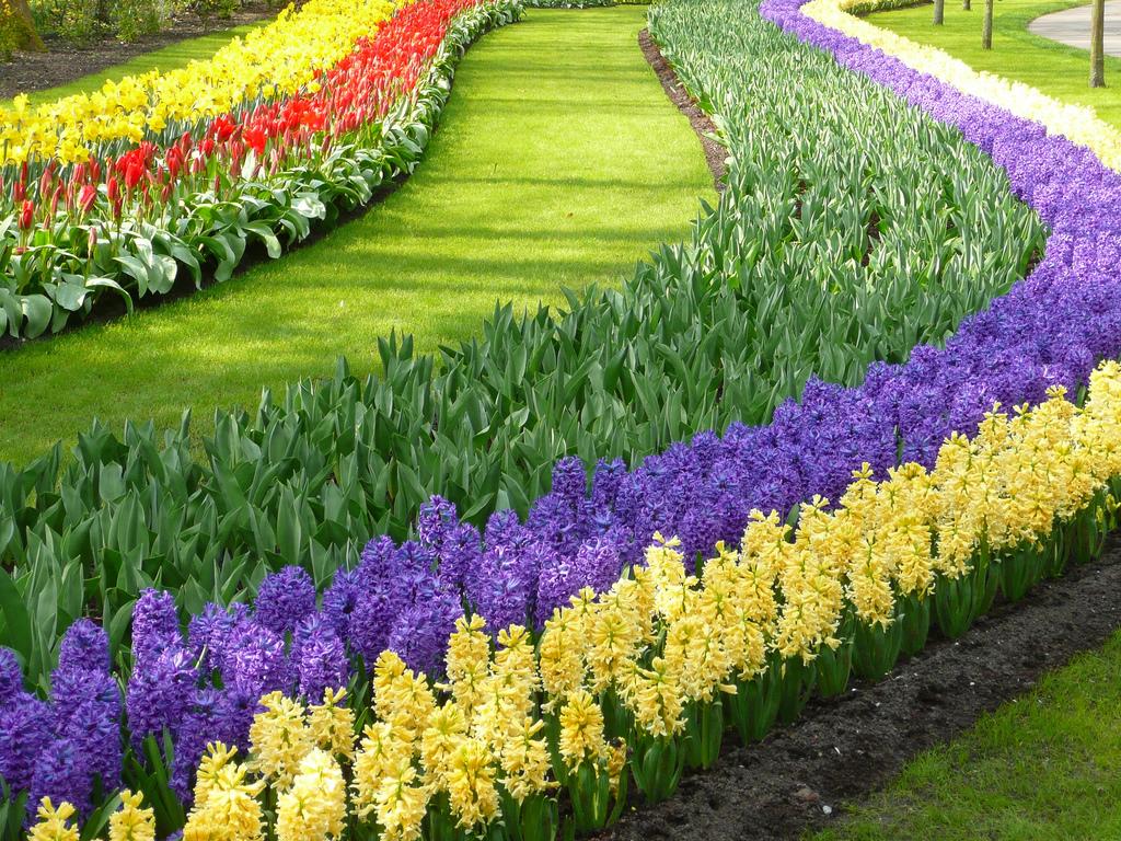 photos | the world's largest flower garden | garden variety