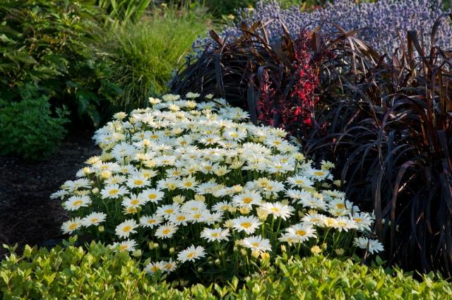 proven-winners-spring-planting-garden-flowers-ideas-4