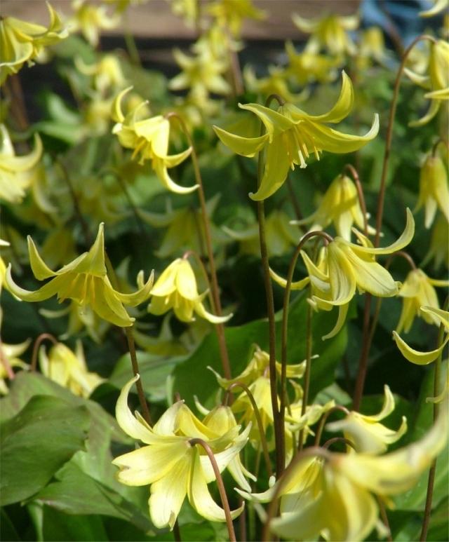 Photo courtesy of Van Engelen (flower bulbs),