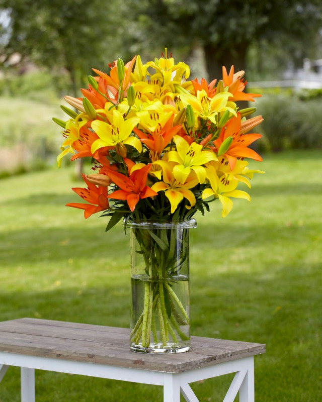 A vase of cut lilies. Photo courtesy of Longfield Gardens, a leading U.S. supplier of flower bulbs.