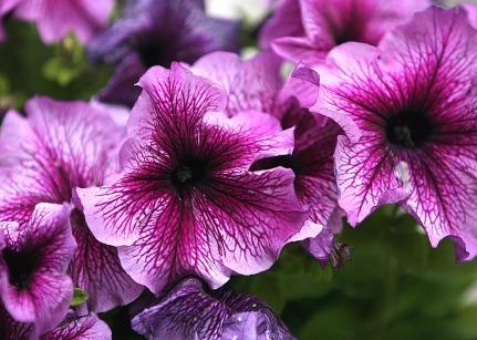 flower-1416313_960_720