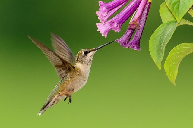 hummingbird-1056383_960_720