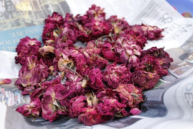dry-roses-1700436_960_720