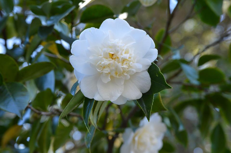 flower-610702_960_720