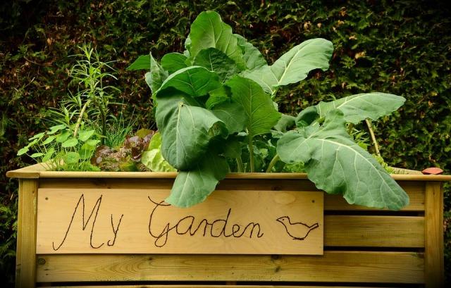 garden-1427541_960_720