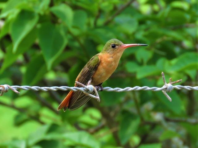 hummingbird-2832365_960_720