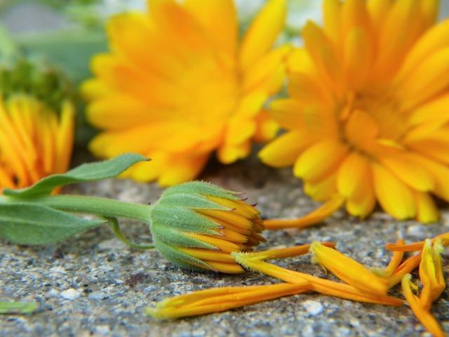marigold-2827292_960_720