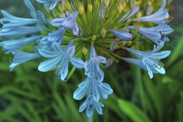 flower-3398663_960_720