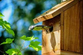 birdhouse-384571_960_720