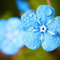 flower-2197679_960_720