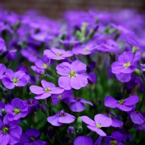 flowers-2233592_960_720